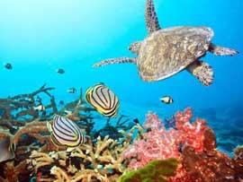tortuga marina y peces