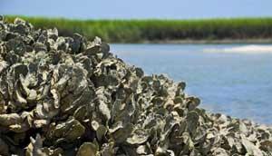 arrecife de ostras