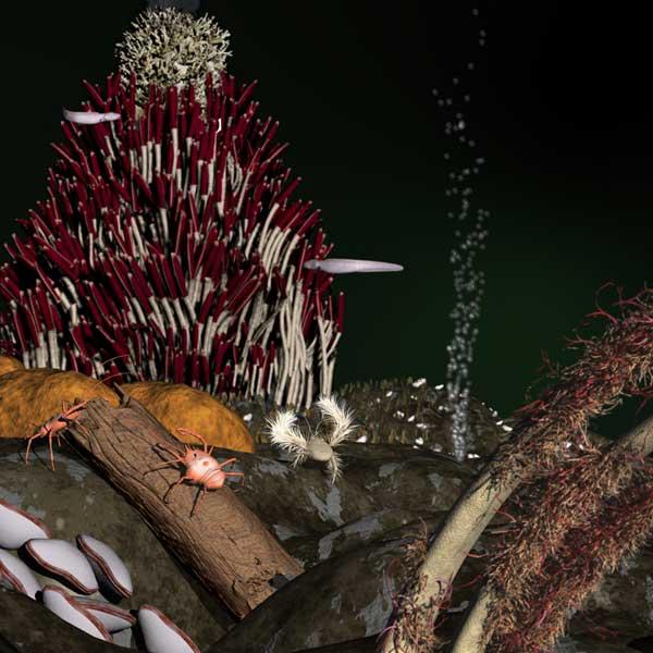 biodiversidad alrededor de las fuentes hidrotermales submarinas