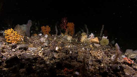 biodiversidad del mar en Indonesia