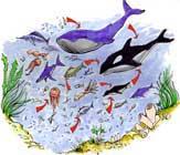 cadena alimentaria marina para niños pequeños
