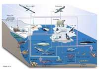 cadena alimentaria marina