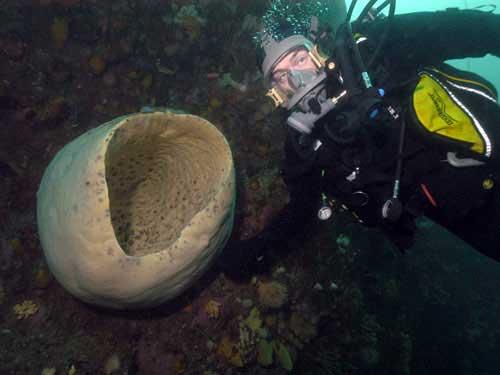 esponja gigante, censo de la vida marina