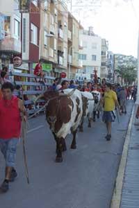 fiestas taurinas de Peñíscola, toros mansos