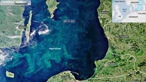floración de fitoplancton en el mar Báltico
