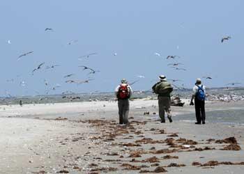playa del Golfo de México
