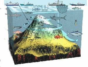 impactos de la pesca en las montañas submarinas
