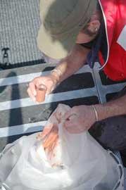 analizando muestras de caca de ballena