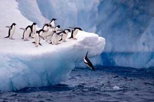 pingüinos saltan al mar en la Antártida