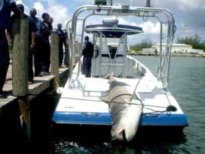 barco que capturó el tiburon tigre en las Bahamas