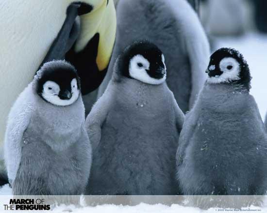 viaje del pingüino emperador