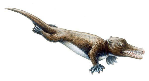 Ambulocetus, la ballena que caminaba