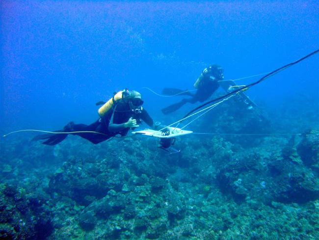 buzos anotan avistamientos de tiburones mientras son remolcados por un bote