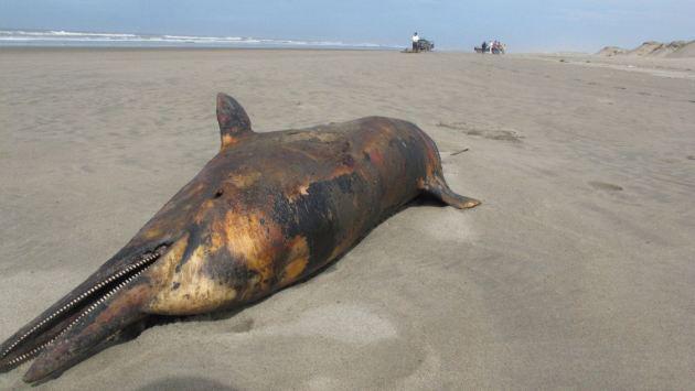 cadáver de delfín en una playa de Perú
