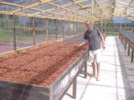 chocolate Rococo, cacao