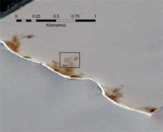 colonias de pingüinos emperador desde el espacio