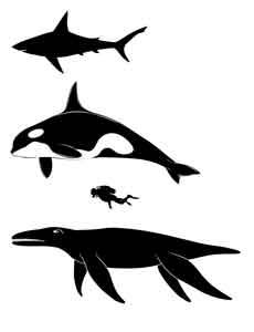 comparación de tamaños entre un pliosaurio, una orca y un buzo