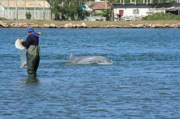 delfines ayudan a pescadores en Brasil