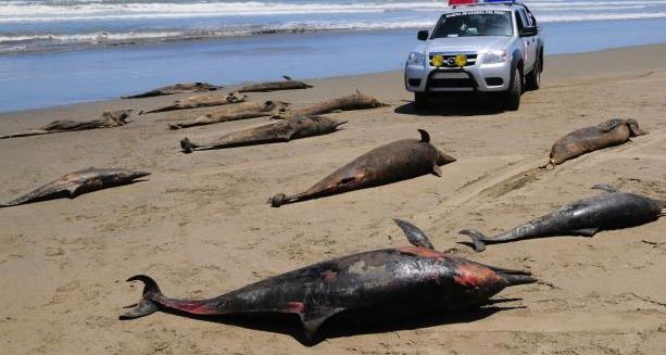 delfines muertos en la costa de Perú