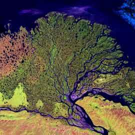 delta del río Lena