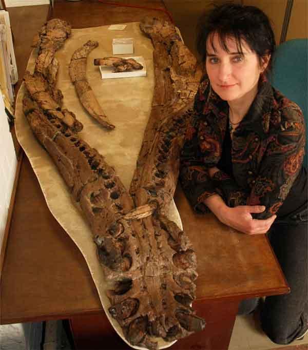 fósil de pliosaurio con artritis