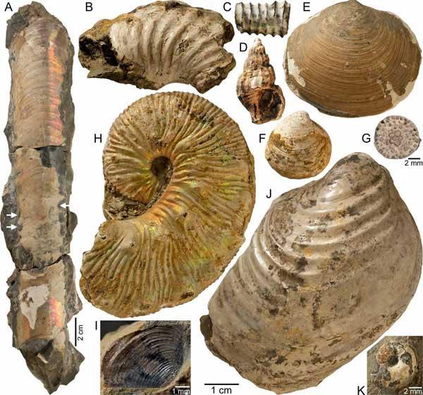 fósiles de amonites en Dakota del Sur