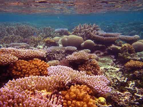 hábitat de corales