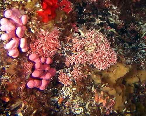 hábitat de hidro coral