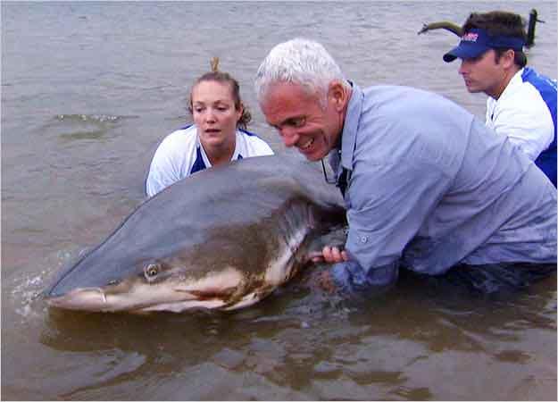 Jeremy Wade con un tiburón toro