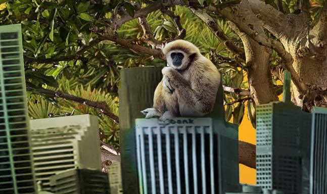 monos asustaos