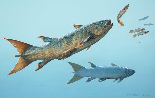 Rebellatrix, nueva especie fósil de celacanto