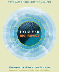 informe pequeñoos peces, gran impacto