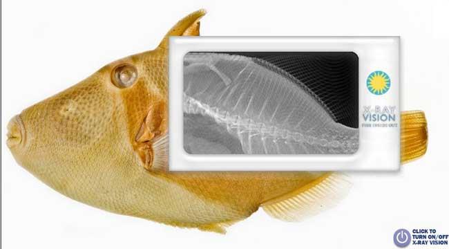 pez mirado online por rayos-x