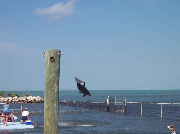 salto de un delfín durante un espectáculo turístico