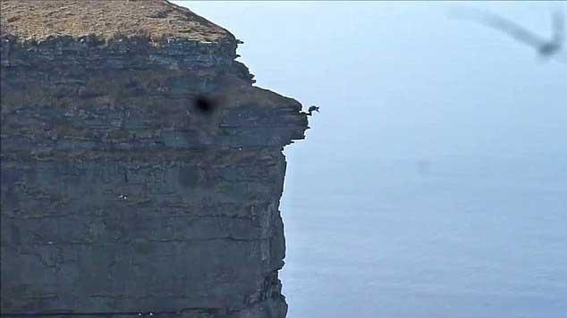 Simon Brentford salta desde el acantilado de St John's Head