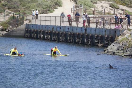 socorristas observan al delfín intimidado en Bolsa Chica, California