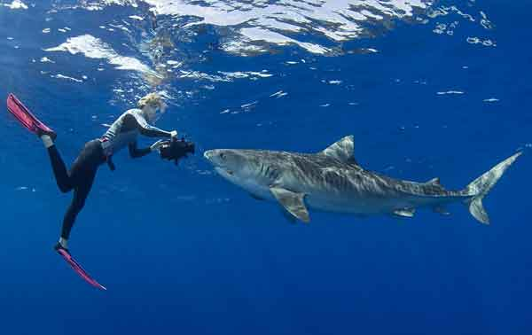 Stefanie Brendl filma a un tiburón tigre