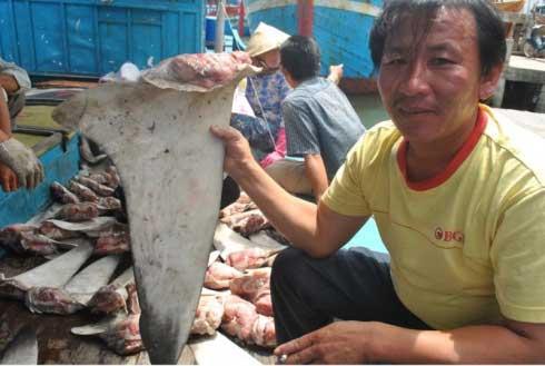 aleta en un mercado de tiburones en Vietnam