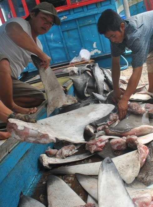 aletas en un mercado de tiburones en Vietnam