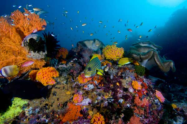 arrecife de coral uicn