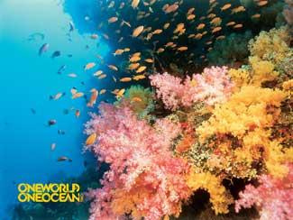 arrecife one ocean