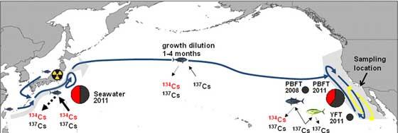 atún radiactivo de Fukushima por el tsunami