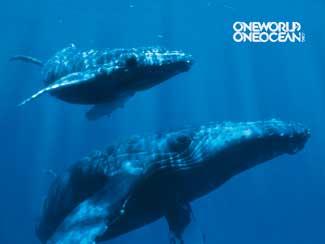 ballenas one ocean