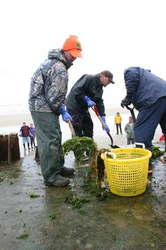 limpieza de especies invasoras del muelle Oregón