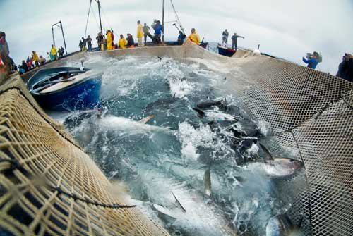 La Mattanza de atún rojo, Italia, sala de la muerte