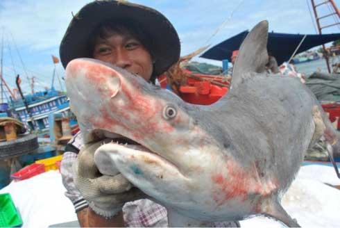 mercado de tiburones en Vietnam