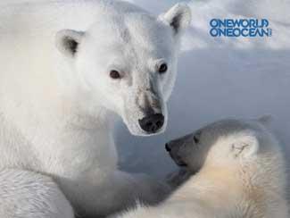 osos polares one ocean