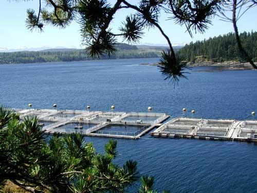 piscifactoría de salmón en Canadá