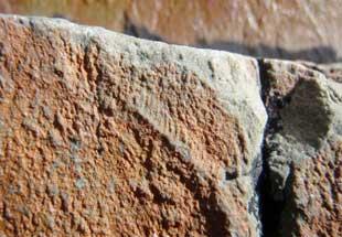rangeomorfo bebé fosilizado (Trepassia wardae)