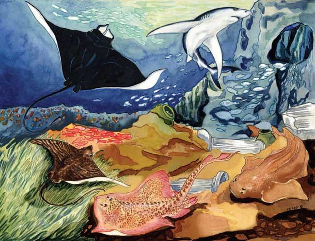 tiburones y rayas de Mediterráneo